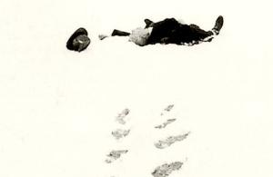 robert-walser-1956